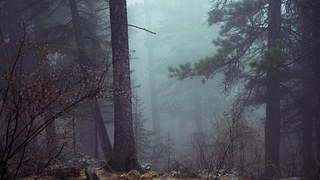 forest-801777__180