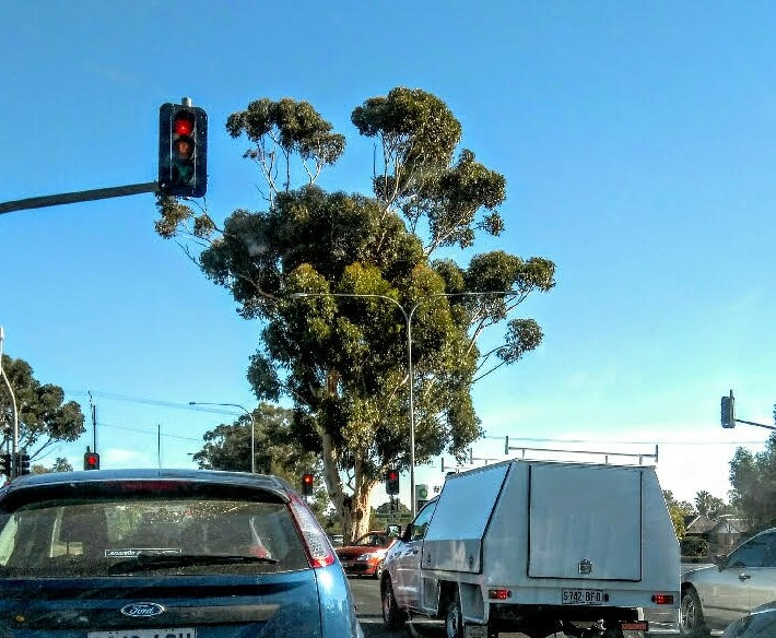 Tree in traffic