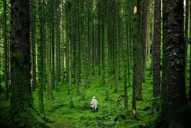 person-lush forest