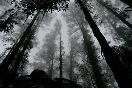 forest-1030832__180