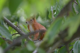 squirrel-255160__180