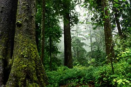 forest-1177545__180