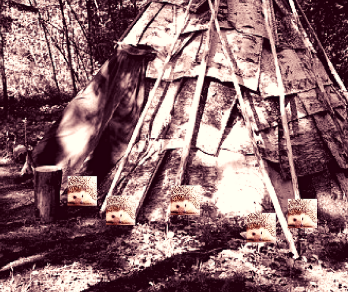 Teepee and porcupines
