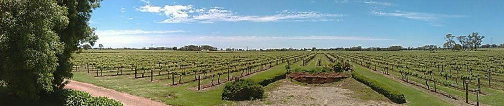 SE wine growing region - Coonawarra