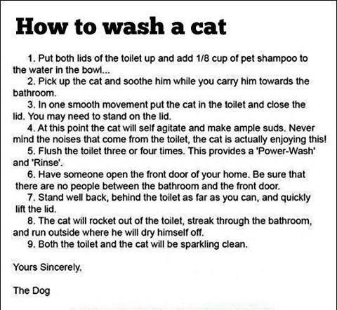 how-to-wash-a-cat