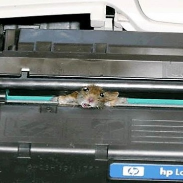mouse in printer